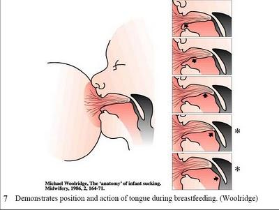 Función y movimientos de la lengua en la lactancia materna