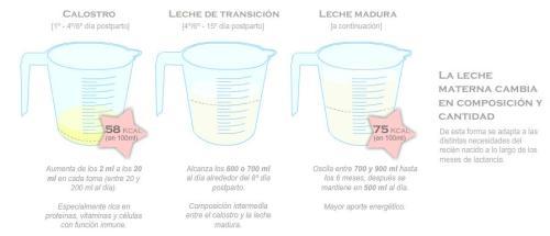 Composición de la leche materna - calostro, leche de transición y leche madura